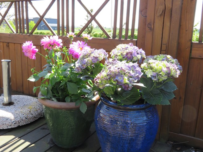 Blomster på terrassen - Plejecentre - Slagelse Kommune